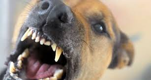 San Antonio Dog Bite Lawyers – Animal Attack Attorneys